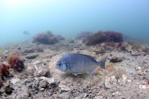 The campaign has started in Dorset over Marine Conservation Zones