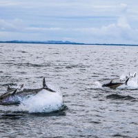 Bluefin Tuna: quota, CHART tagging programme and the implications for recreational  angling